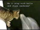 The Cat Dolphin Song  (Original)
