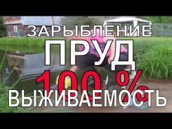🎥  ЗАРЫБЛЕНИЕ ПРУДА КАРАСЕМ 100% РЕЗУЛЬТАТ / Пруд на даче / пруд на участке / Своими руками / 魚の池で