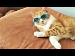 КАЖДЫЙ КОТИК ТАКОЙ  КАЖДЫЙ ПЁСИК ТАКОЙ Funny Cat and Dog Videos Compilation