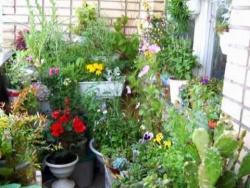 Комнатные цветы. Кактусы. Фантазия. Лето 2010