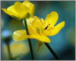 Навстечу Весне