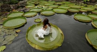 Девушка позирует фотографу на гигантской кувшинке в парке Shuangxi Park.