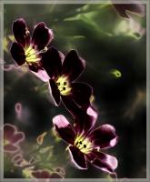 Марсианские цветочки :)))