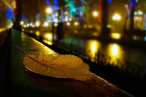 Осень на Приморском бульваре