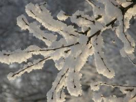 Снежная лилия
