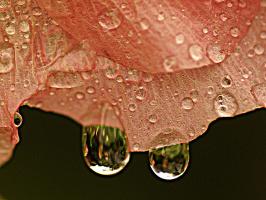 Я видел мальвы плач под музыку дождя...
