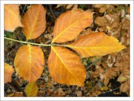 Осенний лист кленовый