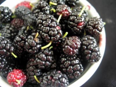 Тутовые ягодки