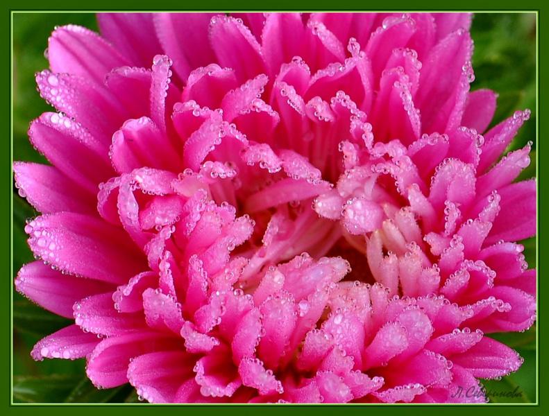 Бриллиантовая крошка  на цветке