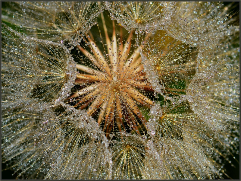 Водяные кристаллы